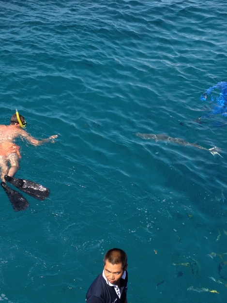 Snorkelers with a barracuda